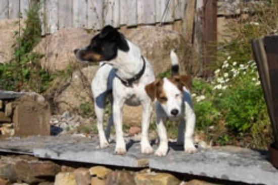 Dog And Pet Friendly Bed And Breakfast In St Agnes Penkerris